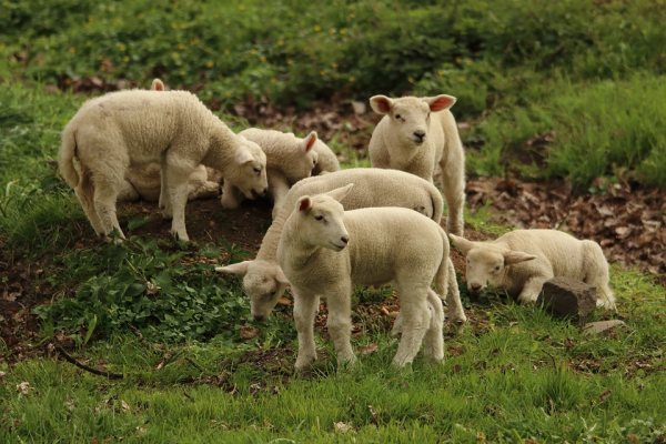 Pastierstvo a chov oviec