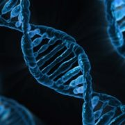 DNA genetika výskum